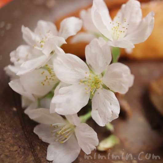 桜の花|菊乃井|赤坂の画像