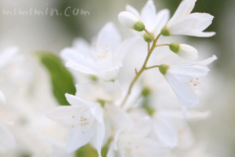 姫空木の写真
