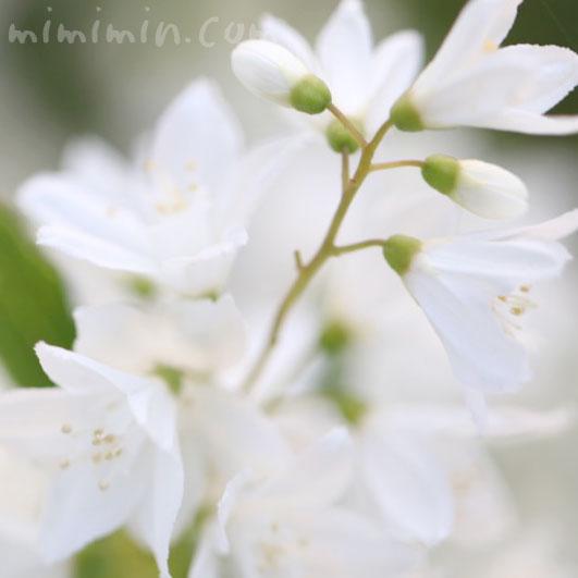 姫卯木の画像