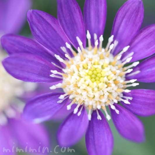 野春菊(ノシュンギク)、東菊(アズマギク)、深山嫁菜(ミヤマヨメナ)の花の写真