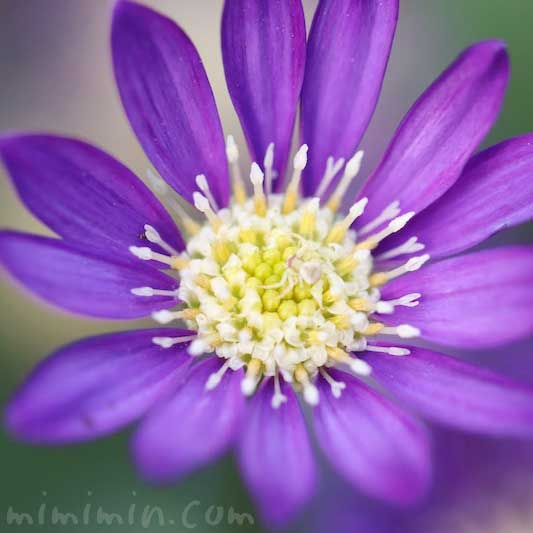 都忘れの花の画像
