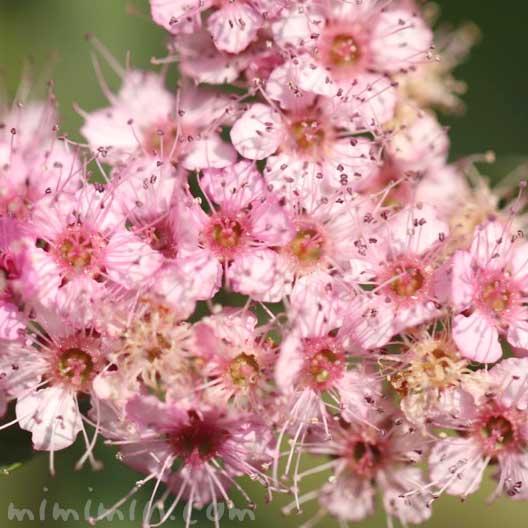 下野(ピンク色)の写真