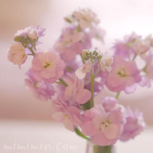 ストックのピンクの画像