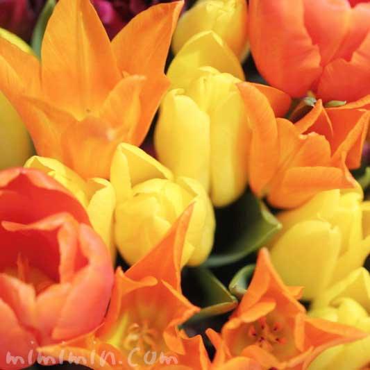 チューリップの花|オレンジ色と黄色