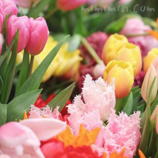 チューリップの切り花の画像|となみチューリップフェアin恵比寿三越の写真