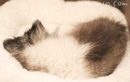 肺水腫で入院していたワンコが退院の画像