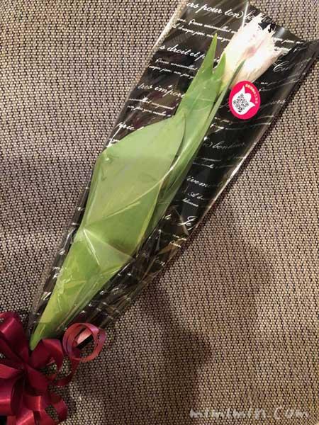 チューリップの切り花|となみチューリップフェアin恵比寿三越の画像