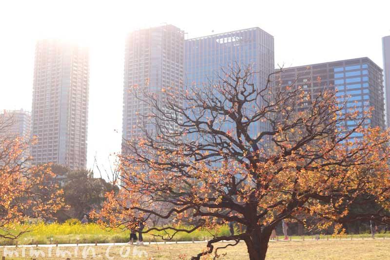 浜離宮恩賜庭園 ビルの景色(東京)