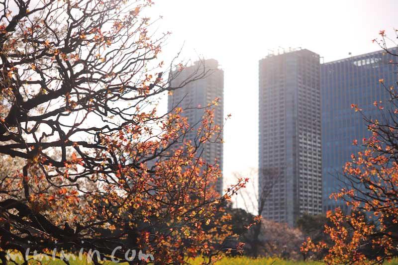 浜離宮恩賜庭園のビルの景色(東京)の画像