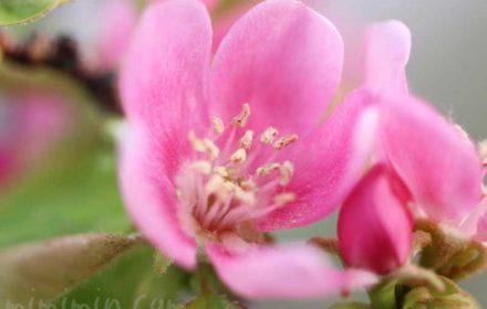 花梨の写真