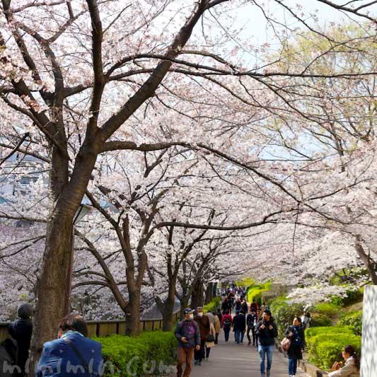 目黒川の桜|お花見 2019年の画像