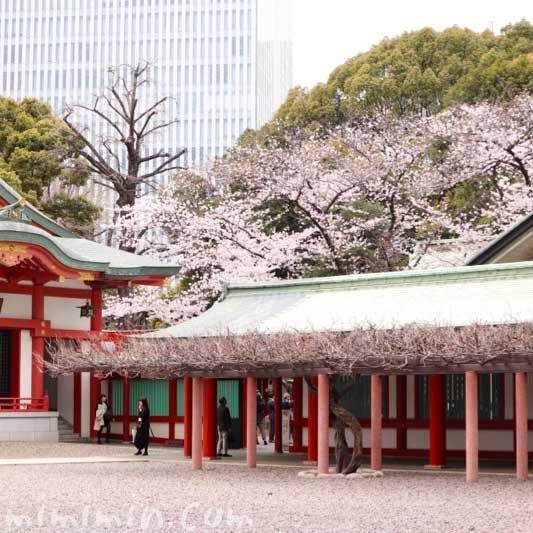山王さん|日枝神社の写真