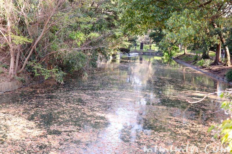 浜離宮恩賜庭園の池の画像