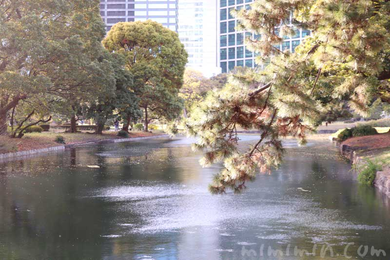 浜離宮恩賜庭園の画像