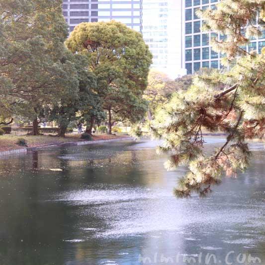 浜離宮恩賜庭園の池(東京)