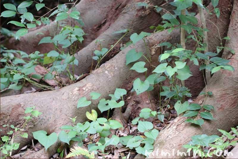 木の幹の画像