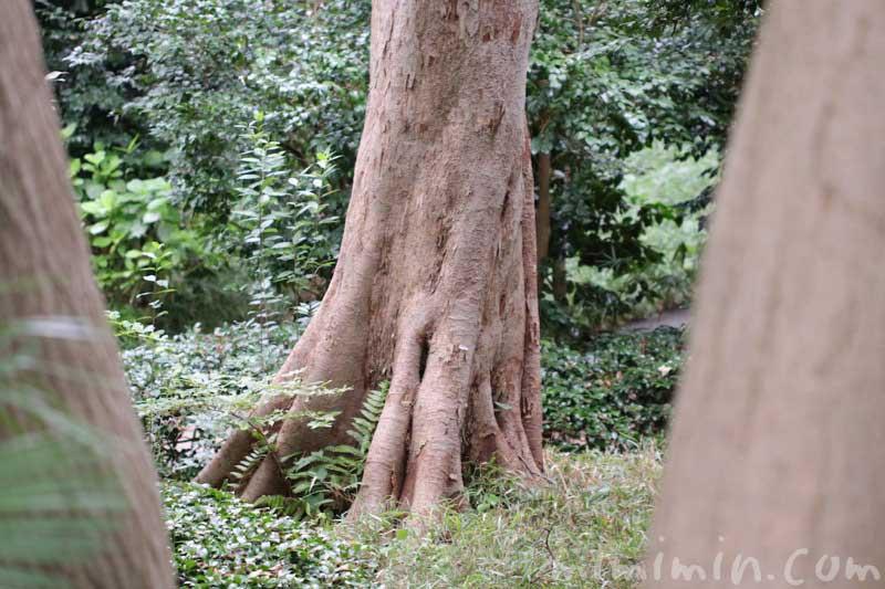ペットの散骨 公園の木の画像