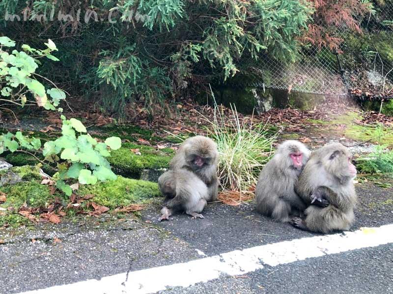 屋久島の猿の写真