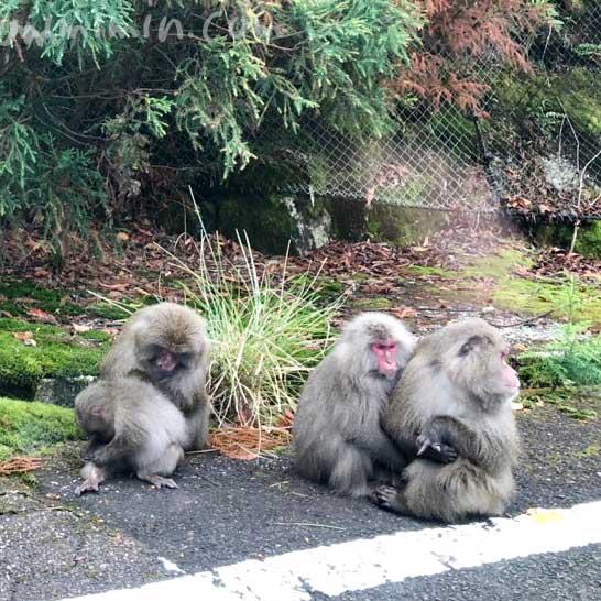 屋久島の猿の家族の画像