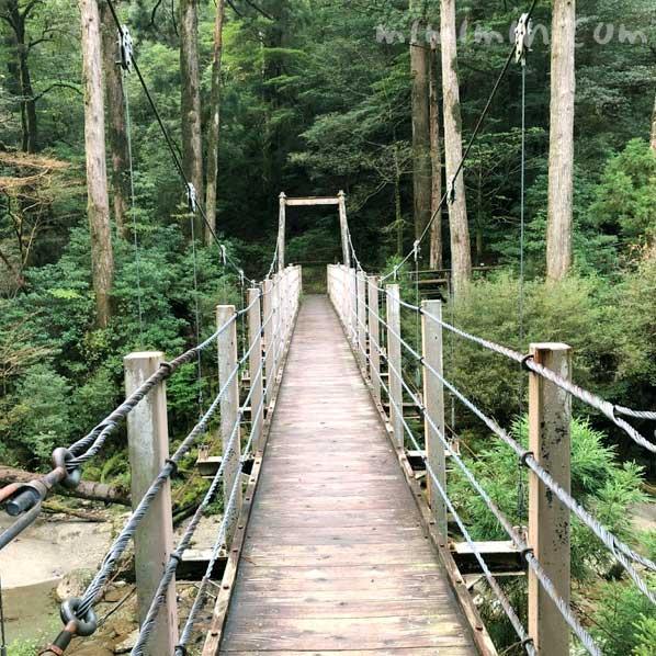 屋久島のヤクスギランドの吊橋の画像