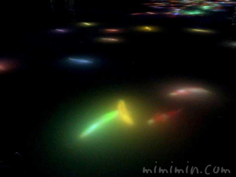 人と共に踊る鯉によって描かれる水面のドローイング チームラボ プラネッツ TOKYO(豊洲)の画像