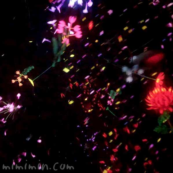Floating in the Falling Universe of Flowers チームラボ プラネッツ TOKYO(豊洲)の写真