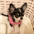 チクワちゃん|ピンク色の服の画像