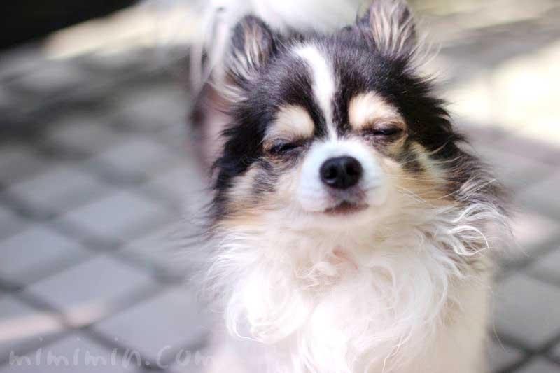 ワンコくんの画像|ブラックタン 犬