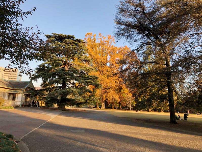 新宿御苑の11月中旬 紅葉の写真