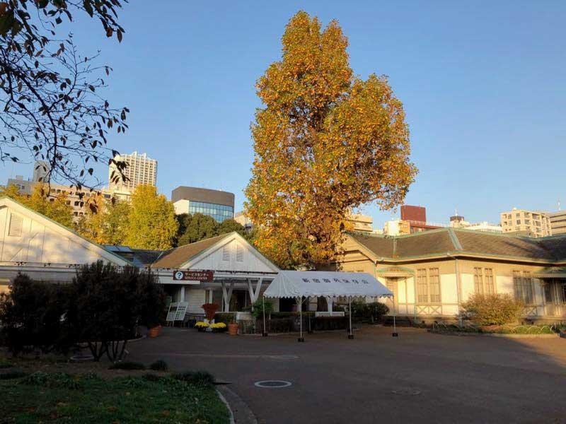 新宿御苑 秋 11月中旬 紅葉の画像