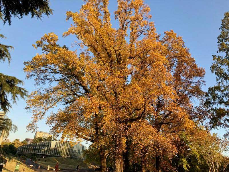 新宿御苑 秋 11月 紅葉の画像