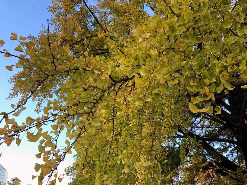 新宿御苑 秋 11月13日 紅葉の写真