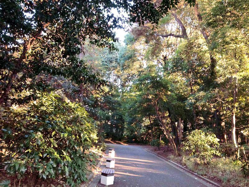 新宿御苑 秋 11月13日の画像