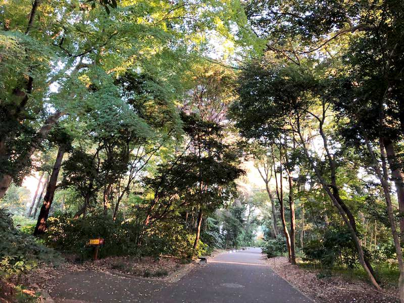 新宿御苑 秋 11月中旬の写真