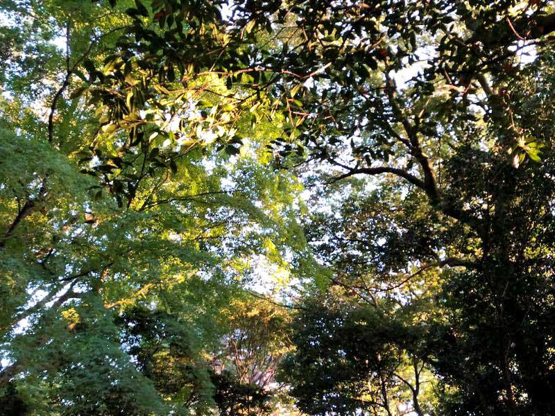 新宿御苑 11月中旬の画像
