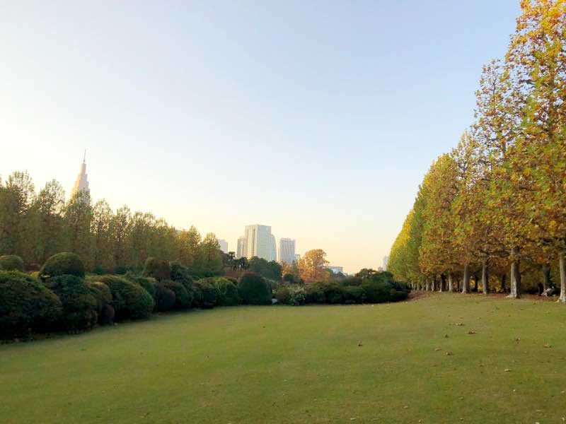新宿御苑 プラタナス並木の紅葉の写真