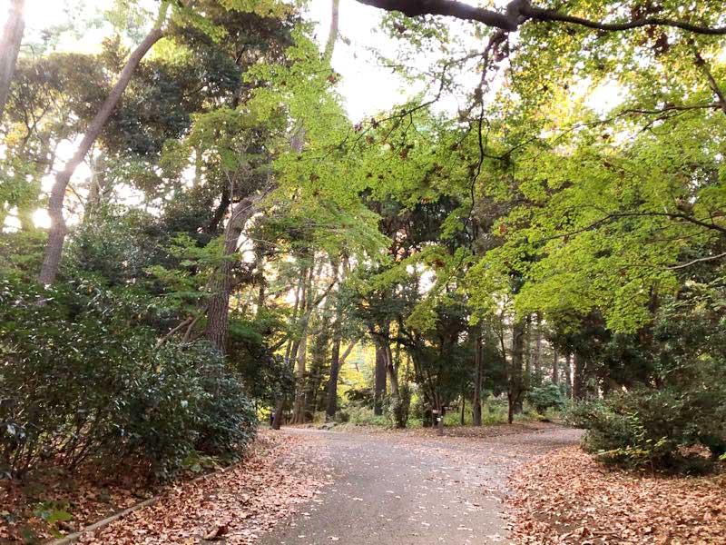 新宿御苑 秋の写真