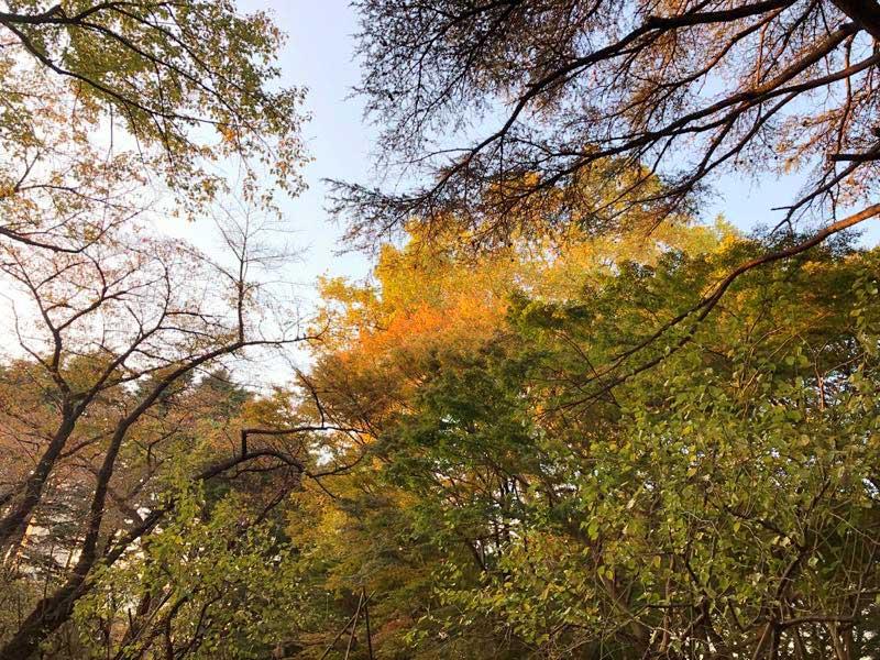 新宿御苑 秋の紅葉の写真