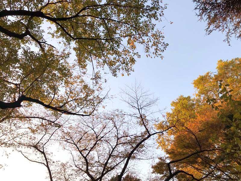 新宿御苑 紅葉の画像