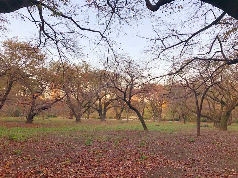 新宿御苑の紅葉の写真